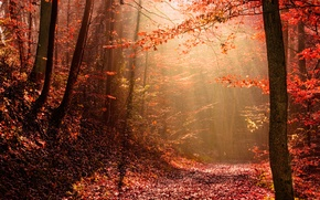 Picture autumn, forest, light, nature