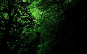 Picture green, dark, jungle