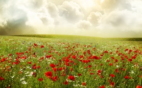 Wallpaper field, the sky, clouds, flowers, Maki, chamomile, plants, red