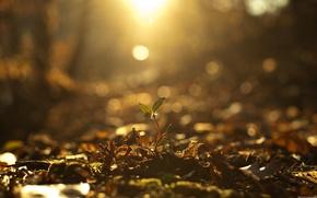 Wallpaper autumn, light, Rostock