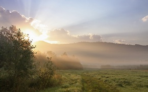 Picture field, grass, the sun, trees, landscape, nature, fog, Rosa, hills, morning