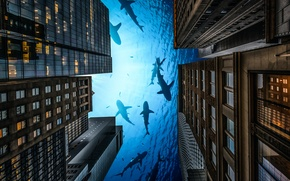 Picture the city, home, sharks