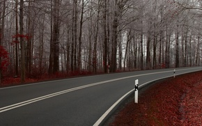 Picture road, trees, nature, the way, landscapes, road, path