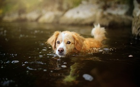 Picture water, dog, puppy