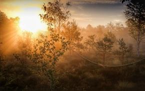 Picture autumn, light, nature