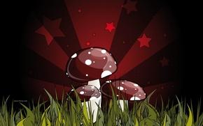 Wallpaper red, green, figure, fatal, mushrooms, grebe. poisonous, mushroom, dark