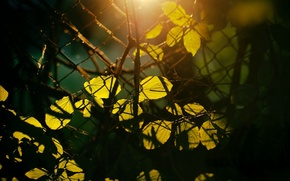 Picture leaves, the sun, macro, rays, trees, branches, background, tree, mesh, Wallpaper, fence, the fence, day, ...