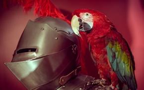 Picture bird, armor, parrot, armor