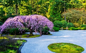 Picture trees, design, garden, USA, the bushes, Portland, Japanese Garden