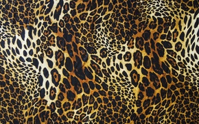 Picture wool, leopard, skin, fur, texture