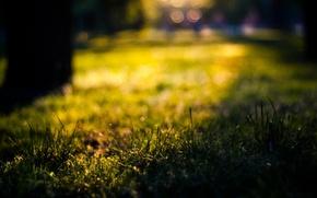 Picture summer, grass, the sun, macro, bokeh