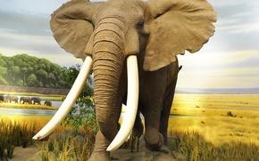 Picture Nature, Elephant, Animals