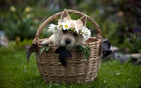 Picture gift, basket, dog