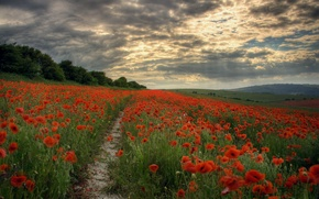 Picture field, the sky, rays, flowers, clouds, Maki, The evening, path, clearance