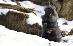 Picture winter, snow, rabbit