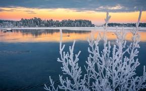 Picture frost, autumn, branches, lake, Sweden, Sweden, frost, Lapland, November