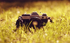 Picture grass, The camera, lens, canon, Antiques