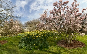 Picture grass, the sun, clouds, trees, flowers, Park, spring, yellow, Germany, blooming, daffodils, Park Ruhr