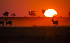 Picture animals, the sun, sunset