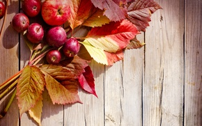 Picture autumn, leaves, apples