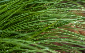 Picture grass, stems, green, macro, drops