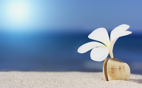 Picture sand, sea, white, macro, flowers, widescreen, Wallpaper, petals, shell, wallpaper, flowers, widescreen, background, full screen, …