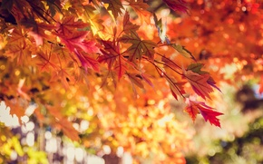 Picture autumn, leaves, nature, tree, yellow, red, orange, bokeh