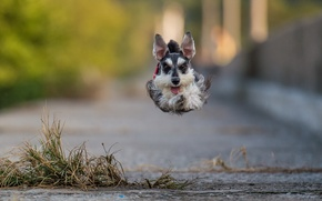Picture each, dog, flight