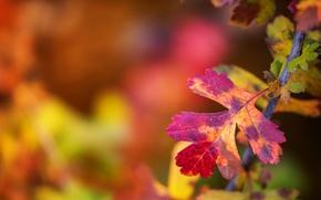 Picture autumn, leaves, macro, sheet, branch, bokeh