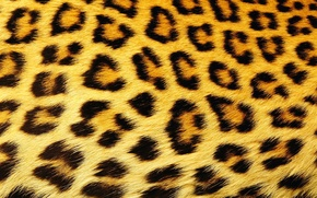 Picture texture, wool, spot, leopard