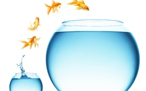 Picture water, fish, aquarium, the situation, small, large, gold, jump