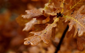 Picture leaves, drops, macro
