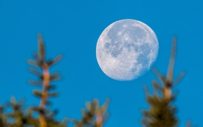 Picture the sky, trees, planet, The moon, bokeh
