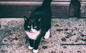 Wallpaper eyes, the sidewalk, cat