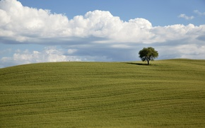 Picture green, field, clouds, tree, countryside, farm, farmland, countryside scene