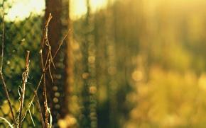 Wallpaper greens, grass, macro, branches, nature, mesh, the fence, Bush, blur, bokeh