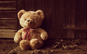 Picture one, toy, bear