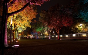 Picture trees, night, the city, lamp, street, Germany, lighting, backlight, lights, alley, Berlin, `Festival of light`