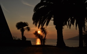 Picture Sunset, Sea, Palm trees, Abkhazia