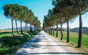 Picture road, trees, alley, coniferous