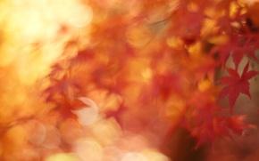 Picture autumn, macro, foliage, maple, bokeh, November