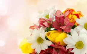 Picture flowers, tulips, chrysanthemum, Alstroemeria