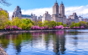Picture trees, home, spring, New York, USA, pond, blooming, Central Park