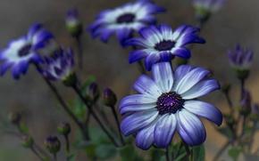 Picture field, plant, petals, garden, meadow