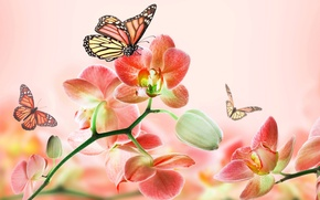 Picture summer, butterfly, flowers, abstraction, background, pink, beauty, art, Orchid, 3d.
