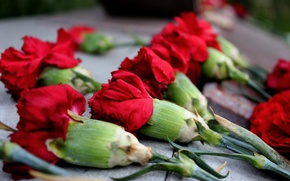 Picture flowers, memorial, clove, red