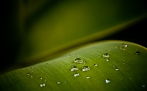 Wallpaper greens, macro, sheet, drop
