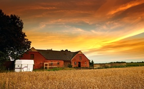 Picture wheat, the sky, leaves, the sun, clouds, trees, nature, house, background, tree, Wallpaper, plant, rye, ...