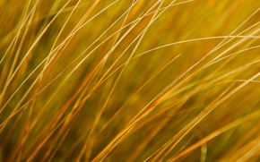 Picture field, autumn, grass, nature, plant, meadow
