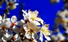 Picture flower, flowers, flowering, drain